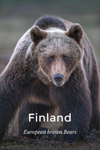 Finland European brown Bears