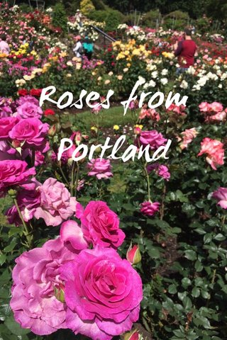 Roses from Portland