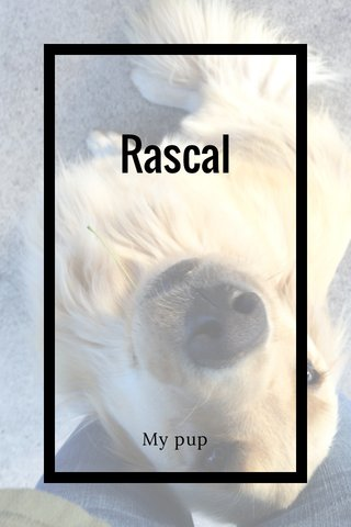 Rascal My pup