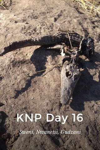 KNP Day 16 Sweni, Nwanetsi, Gudzani