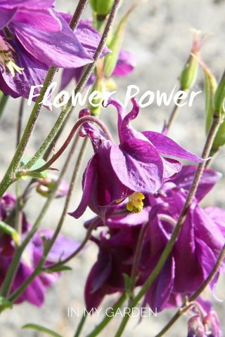 Flower Power IN MY GARDEN