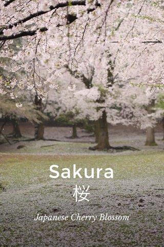 Sakura 桜 Japanese Cherry Blossom