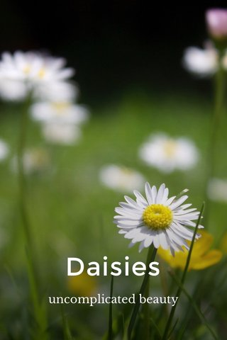 Daisies uncomplicated beauty