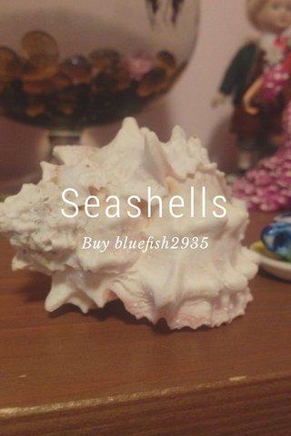 Seashells Buy bluefish2935