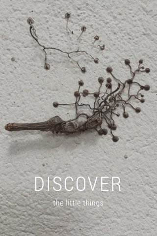 DISCOVER the little things