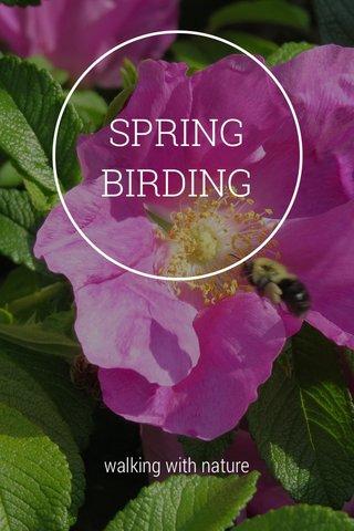 SPRING BIRDING walking with nature