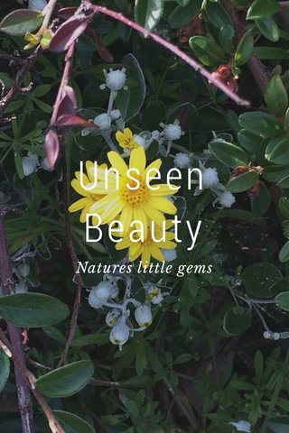 Unseen Beauty Natures little gems