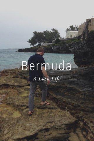 Bermuda A Lush Life