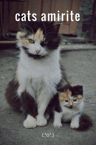 cats amirite (,*o*,)