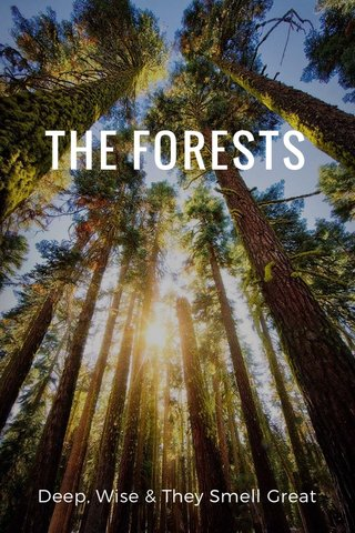 THE FORESTS Deep, Wise & They Smell Great