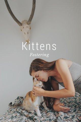 Kittens Fostering