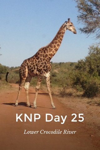 KNP Day 25 Lower Crocodile River