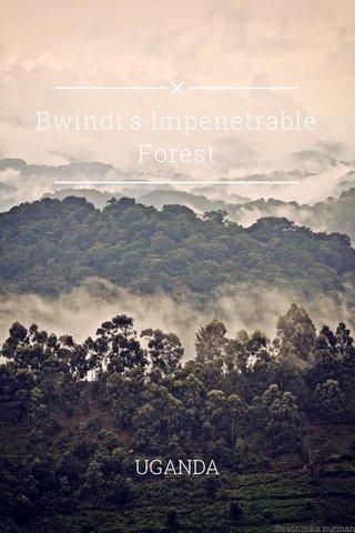 Bwindi's Impenetrable Forest UGANDA