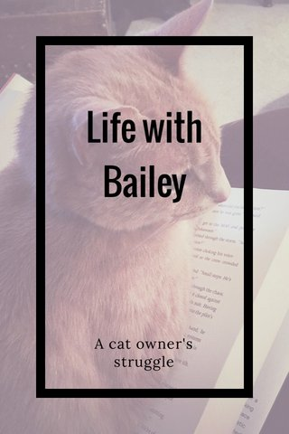 Life with Bailey A cat owner's struggle