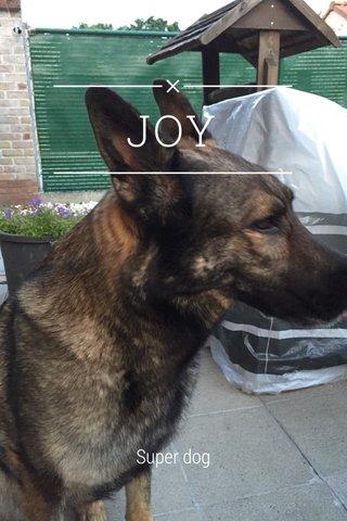 JOY Super dog