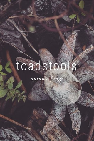toadstools autumn fungi
