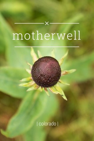 motherwell | colorado |
