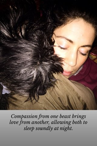 Compassion from one beast brings love from another, allowing both to sleep soundly at night.