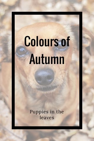 Colours of Autumn Puppies in the leaves