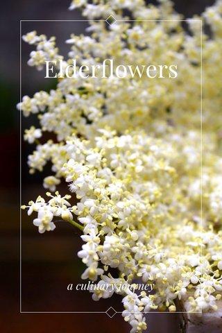 Elderflowers a culinary journey