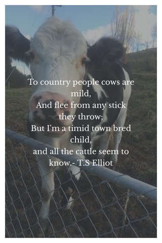 To country people cows are mild, And flee from any stick they throw; But I'm a timid town bred child, and all the cattle seem to know.- T.S Elliot