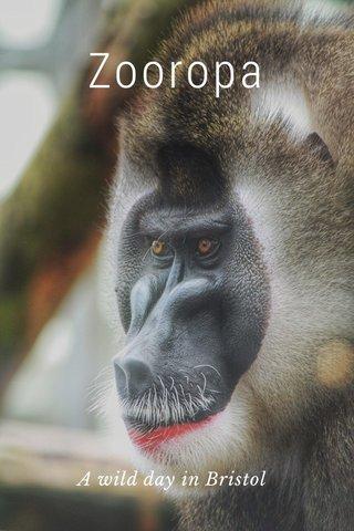 Zooropa A wild day in Bristol
