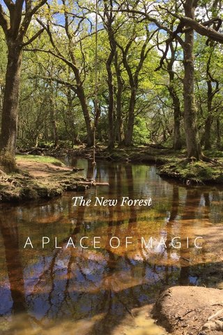 A PLACE OF MAGIC The New Forest