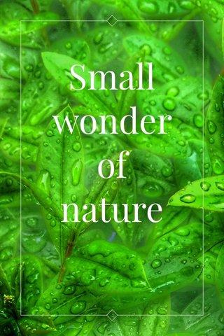 Small wonder of nature