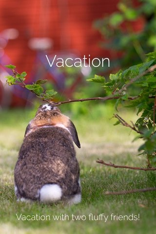 Vacation Vacation with two fluffy friends!