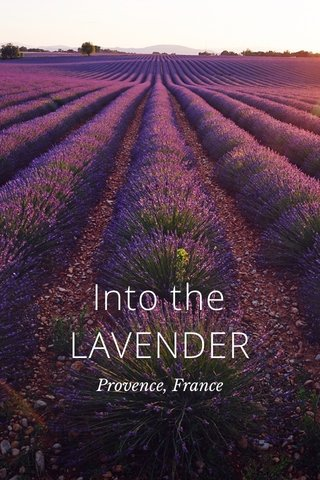Into the LAVENDER Provence, France