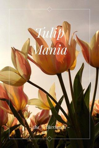 Tulip Mania - the Netherlands -