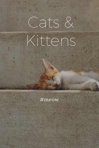 Cats & Kittens #meow