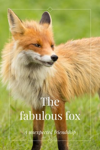The fabulous fox A unexpected friendship