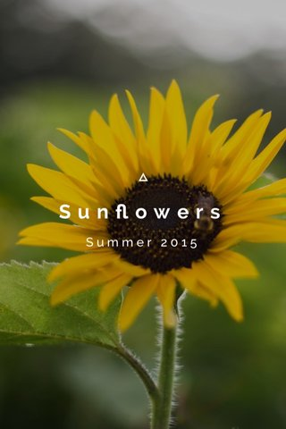 Sunflowers Summer 2015