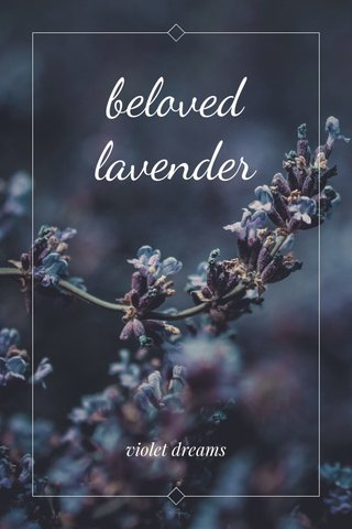 beloved lavender violet dreams