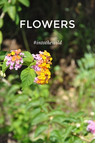 FLOWERS #intothewild