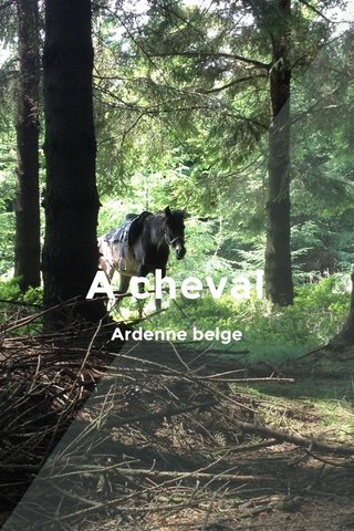 A cheval Ardenne belge