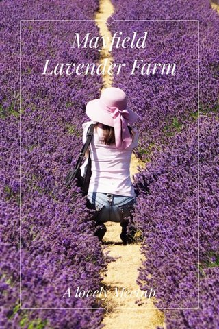 Mayfield Lavender Farm A lovely Meetup