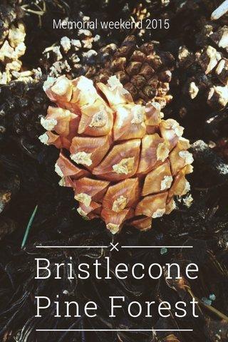 Bristlecone Pine Forest Memorial weekend 2015