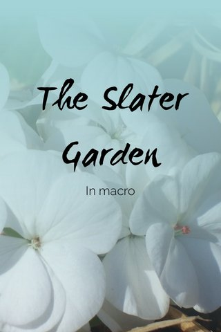 The Slater Garden In macro