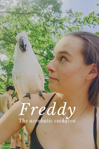 Freddy The acrobatic cockatoo
