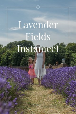 Lavender Fields Instameet