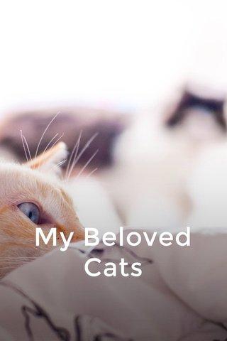 My Beloved Cats