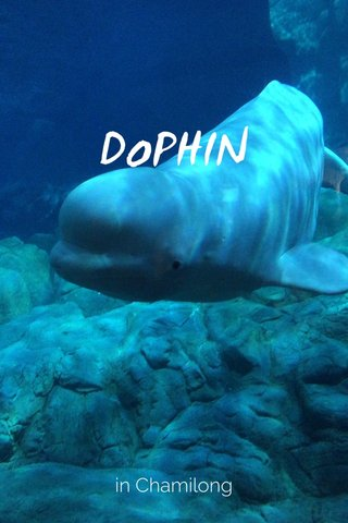 DoPHIN in Chamilong