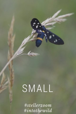 SMALL #stellerzoom #intothewild