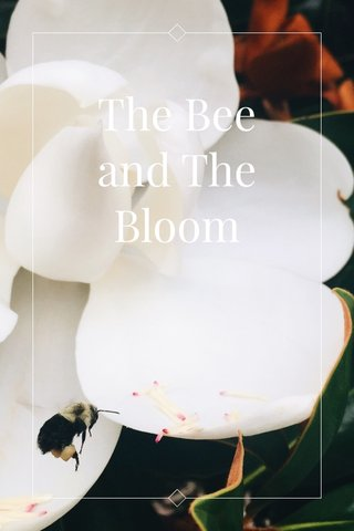 The Bee and The Bloom