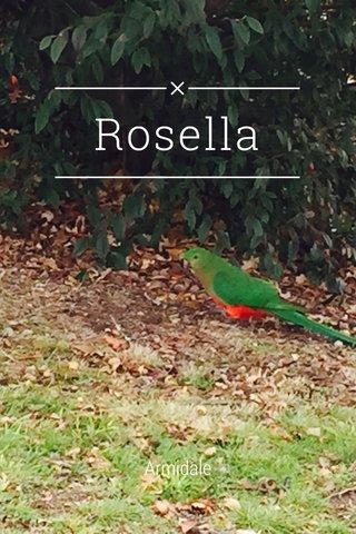 Rosella Armidale