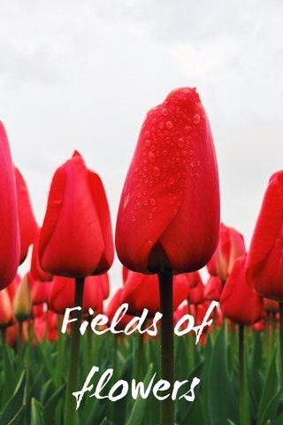 Fields of flowers SUBTITLE