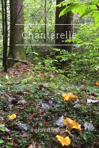 Chanterelle | a forest forage |
