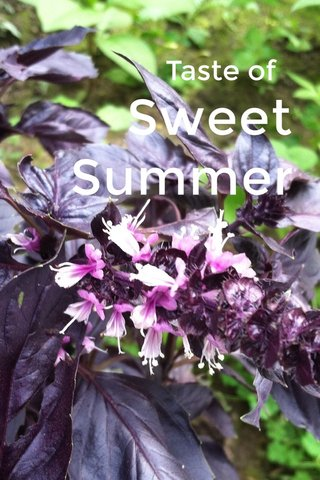 Sweet Summer Taste of